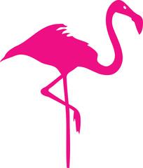 Flamingo stehend