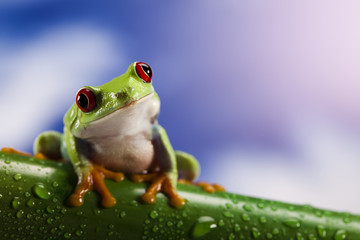 Frog and blue sky