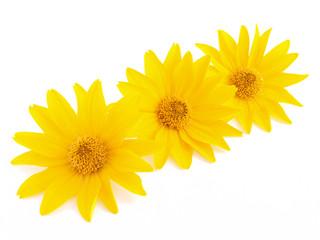 Three yellow flowers on the white