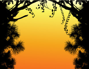 Nature Tree Silhouette