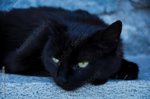gratis giovane nero micio foto grande Lound