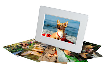 white digital photo frame with photos of a chihuahua isolated