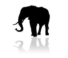 Eléphant en ombre chinoise