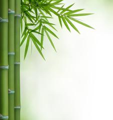 Obraz bamboo - fototapety do salonu