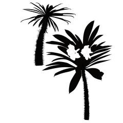 Palm tree cactuses a tree