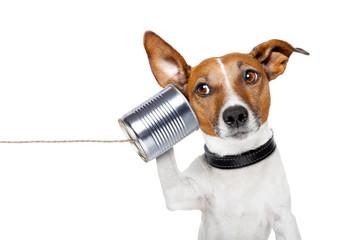 Printed roller blinds Crazy dog dog on the phone