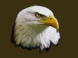 Graphical sketch of head predator eagle