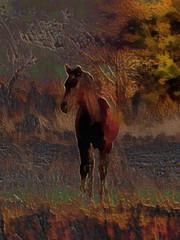 3D Young Foal Illustaration