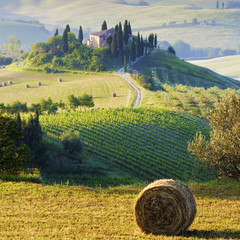 Wall Mural - campagna Toscana, Italia