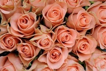 Fototapeta Różowe róże obraz