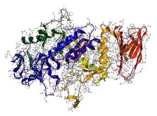 Enzyme Alpha-Amylase. 3D molecular structure