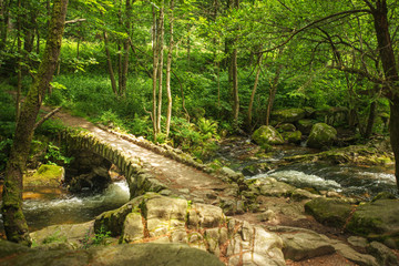 Stream through a sunlit forest