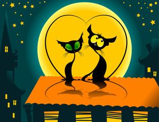 cat's night