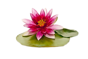 Spoed Fotobehang Waterlelies water lily on white beautiful flower