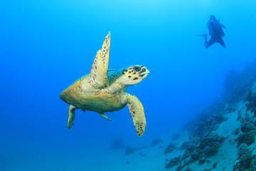 Scuba Diver and Turtle