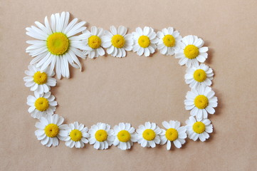 frame with daisies