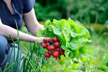 Poster de jardin Legume picking vegetables