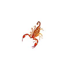 scorpion scorpions animal