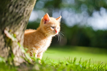 little kitten in the garden