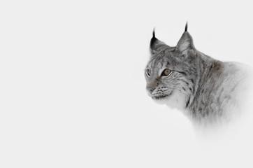 Hi Key Lynx