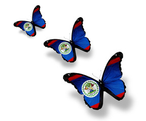 Three Belize flag butterflies, isolated on white