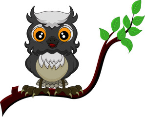 cute owl cartoon standing in the branch