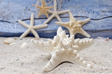 Starfish in the sand in front of a blue wooden wall