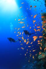 Scuba Divers swim beside coral reef under boat