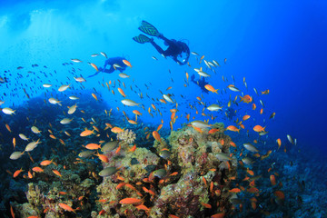 Scuba Divers swim over a coral reef