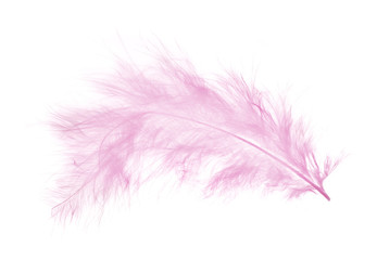 light pink feather isolated on white