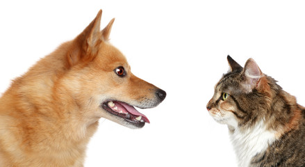 Wall Mural - Dog and Cat looking at each other
