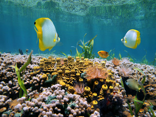 Reef and water surface
