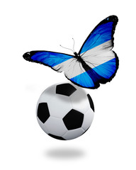 Concept - butterfly with Argentine flag flying near the ball, li
