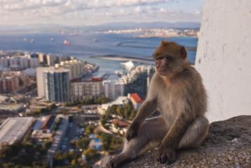 Autocollant pour porte Delhi Gibraltar monkey