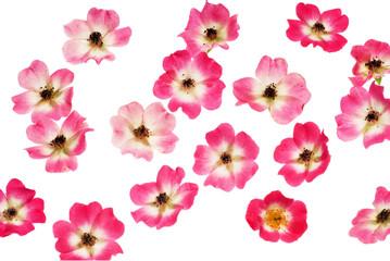 Полет цветов