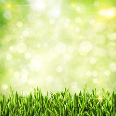 Green grass. Abstract natural backgrounds