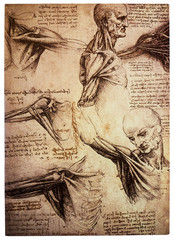 Old anamtomical drawings by Leonardo DaVinci