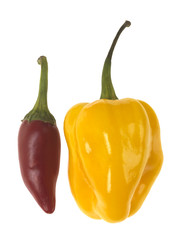 Canvas Prints Hot chili peppers Raw Chillies