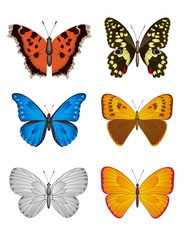 Set of Butterfly, Vector Illustration.