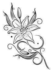Lilie, Lilien, filigran, feminin, Ranke, Blume, Blüte