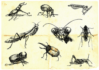 Hand-drawn collection. Beetles and insects.