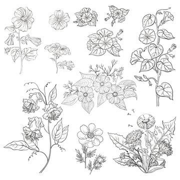 Flowers, set, outline