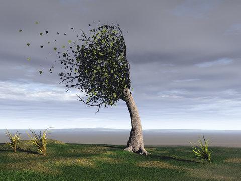 árbol azotado por el viento