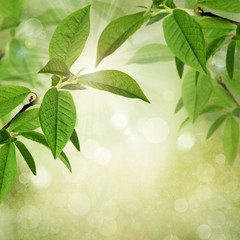 Summer or spring textured background with green leaves