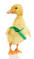 Duckling with ribbon isolated on white