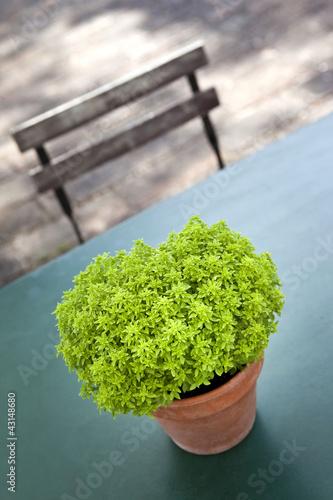 Plante Jardin Terrasse Patio Pot Chaise Meuble Vert