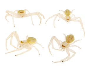 four small isolated light spiders