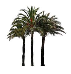 Drei Palmen