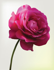 Red rose. Mesh flower