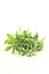 Stevia mit Blüten